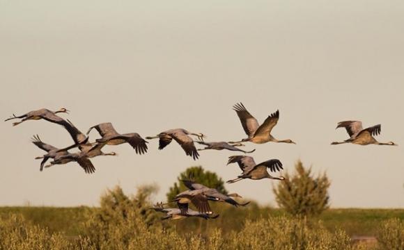 У Херсонській області знову загинули рідкісні птахи