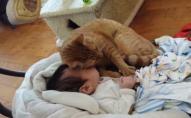 На Рівненщині загинув малюк – кіт спав у дитини на обличчі