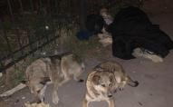 У всіх на очах: у Тернополі посеред вулиці помирала жінка