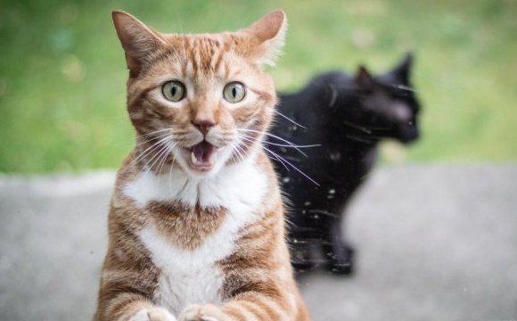 Комунальники звинуватили луцьких котів у псуванні майна