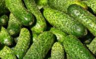 В Україні подешевшали огірки