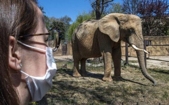 Зоопарк пропонує людям тварин напрокат