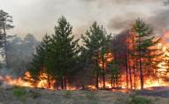 Волинянин який випадково підпалив 1,2 га лісу, піде під суд