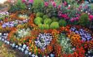 На посадку квітів та кущів у Луцьку виділили 8 мільйонів
