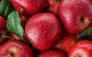 Індійський фермер створив новий сорт яблук: чому він особливий