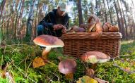 Для українських грибників Білорусь відкриває кордон