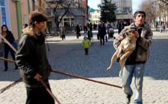 КП «Ласка» отримає 500 000 грн на відлов бродячих собак