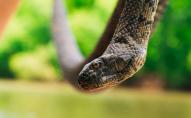 Змії-окупанти: жителі багатоквартирного будинку страждають від нашестя плазунів