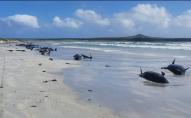 На берег викинулися 49 чорних дельфінів: дев'ятьох врятувати не вдалось