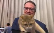 Розрядив обстановку: кіт Геращенка вліз у прямий ефір. ФОТО