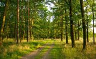 На Волині лісник «попав» на 400 тисяч гривень: дозволяв вирубувати дерева