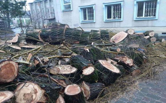 На вулиці Винниченка зрізають дерева. ФОТО