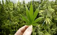 ООН виключила марихуану з переліку небезпечних наркотиків