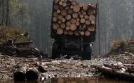 Троє рівнян збували незаконну деревину з трьох областей на Волині