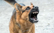 На Волині жителі громади потерпають від нападів собак