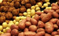 В Україні подешевшала картопля