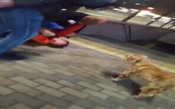 У столичному тролейбусі сталася бійка: водію розбили голову палицею. ВІДЕО