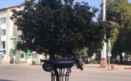 Незвичайна парковка: у центрі Луцька електросамокат залишили на дереві. ФОТО