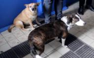 У Нововолинську в одній кімнаті гуртожитку живе 12 собак та 10 котів. ВІДЕО