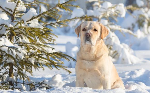 У Луцьку пес покусав людину: собаку конфіскують, а власник заплатить штраф