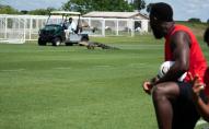 Алігатор зірвав тренування команди і не на жарт перелякав футболістів. ВІДЕО