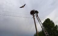Поблизу Луцька рятувальники лелеченя рятували. ФОТО