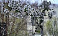 В Україну йде справжня весна – з грозами та теплом до +17°