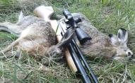 За вбитого зайця волинянин мусив сплатити 8000 гривень