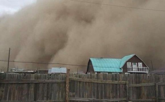 Через піщану бурю у Монголії загинули 5 пастухів і дитина. ВІДЕО