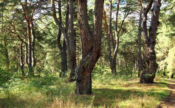 Волинська ОДА виділила лісову ділянку будівельній компанії