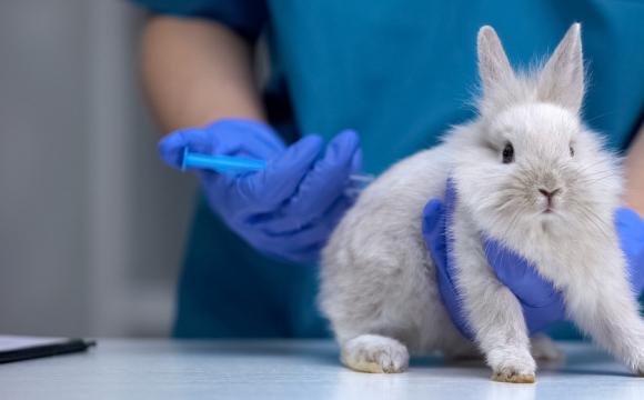 Заборонили тестувати косметику на тваринах