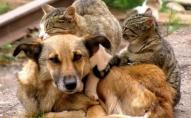 «Жорстокість лише множиться»: у Луцьку пройде марш за захист тварин