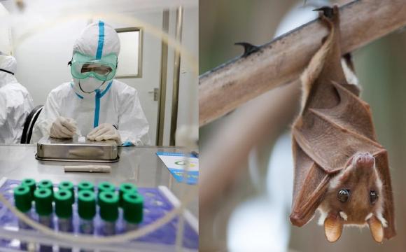 У Китаї виявили нові коронавіруси у кажанів