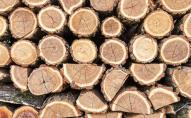 На Волині у лісосмузі знайшли заховану деревину. ФОТО