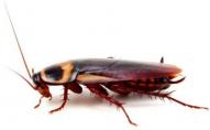 Не хотів пускати жінку на заробітки: горохівчанин напився отрути від комах