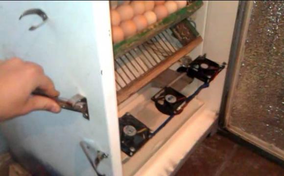 Волинянин змайстрував інкубатор з холодильника