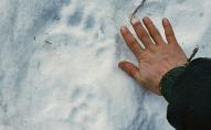 На Алясці ведмідь укусив туристку за сідниці