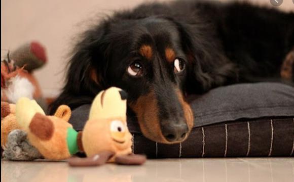 За насильство над собаками судили волинянина