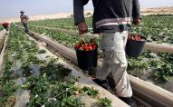 У ЄС різко збільшився попит на робітників з України