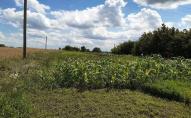 У селі під Луцьком продають землю боржника