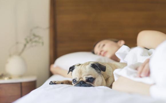 Показали простий спосіб швидкого засинання