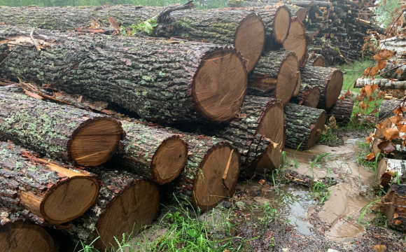 Держекоінспекція перевірить 5 волинських лісгоспів