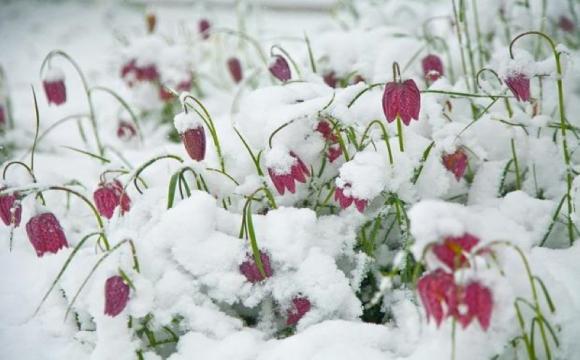 Народний синоптик дав прогноз погоди на весну-2021: холоди будуть до квітня