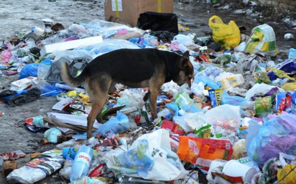 Мешканців громади на Волині просять повідомляти про стихійні сміттєзвалища