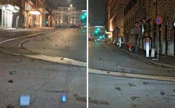 У Римі сотні птахів загинули через новорічні феєрверки