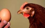 В українських яйцях знайшли сальмонелу