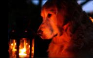 Завтра, 28 січня, на 9 вулицях Луцька не буде світла