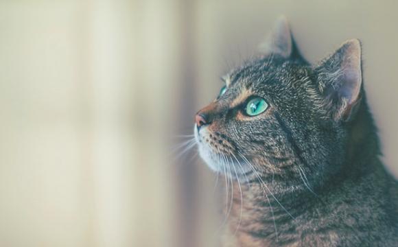 Пенсіонер убив каменем сусідського кота