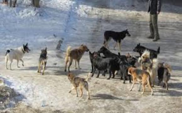 На Волині агресивні пси кусають людей. ВІДЕО