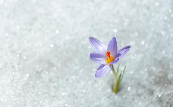 Волинські синоптики попереджають про весняне похолодання